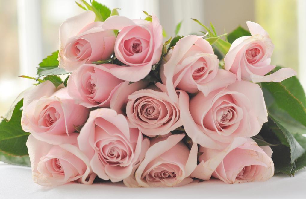 obzor cvety rozovie
