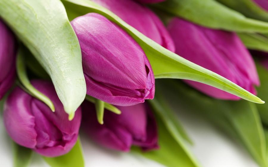 stati dostavka cvetov obzor